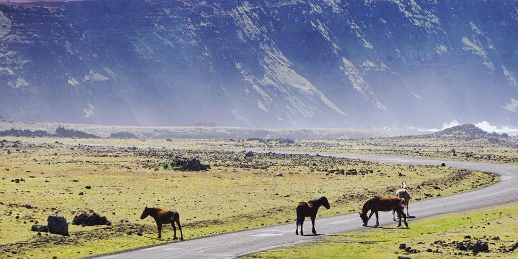 Horses graze in Chile's pastures